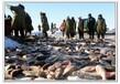 内蒙古查干湖鱼哪里有卖
