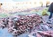 青海查干湖鱼多少钱一斤