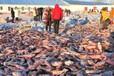 查干湖冬捕鱼多少钱一斤