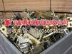 漳州港现在废铁多少钱一吨