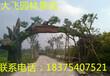 泰安生态园门头泰安生态园大门泰安生态园造景