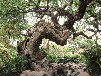 普兰店假山丶假树丶塑石假山丶仿木栏杆厂家联系方式
