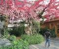 自贡仿木栏杆自贡假山假树质量保证
