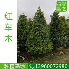 上海哪里批发红车木,上:斐的炯鄹癖阋说,景观造园