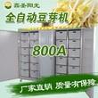 鑫圣陽光自動控溫豆芽機省時省力豆芽機優質豆芽機