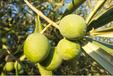 点点乐商城初榨橄榄油一个可以投资理财的商城买到就是赚到