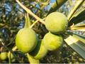 点点乐商城初榨橄榄油一个可以投资理财的商城买到就是赚到图片