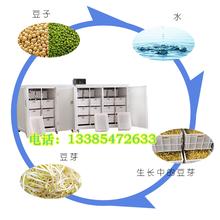 廊坊中小型豆芽机24小时循环生产的机器价格全自动豆芽机在家就可生产