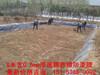 五河县藕池防渗膜莲藕池专用膜