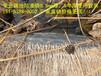 汉川市藕池防渗膜藕池防渗布,防渗膜