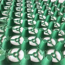 哈尔滨塑料排水板厂家A朔料排水板多少钱A地下室顶排水板哪里有A防护排水板厂家图片