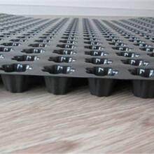 镇江塑料排水板A唐山塑料排水板A排水板标准A塑料排水板经销商图片