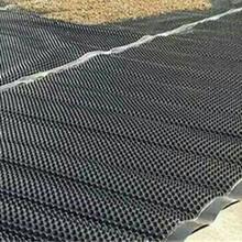 內蒙古塑料排水板A排水板生產廠家A防排水板A綠化蓄排水板圖片