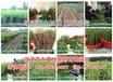晚熟黄肉油桃有哪些品种√山东-杭州桃品种介绍信息