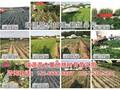 秋雪桃苗价格对比√山东瑞源一号冬桃品种介绍图片