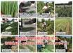 10月份上市的油桃新品种√山东-北京桃品种介绍信息