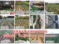 桃树新品种优选瑞源冬桃(新品种桃苗)桃树新品种优选瑞源冬桃介绍图片