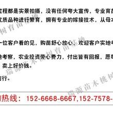 油潘5桃桃苗欢迎光临%合肥新闻网图片