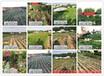 早熟黄桃品种有哪些_哪里能买到早熟桃树苗-福州