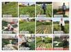 湖南黃桃樹苗哪里的好樹苗哪有賣