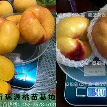 赣州什么桃品种最牟甜_赣州品种特点