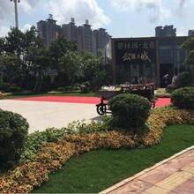 广东惠州市碧桂园公园上城适合投资吗?出事后为什么还这么火爆图片