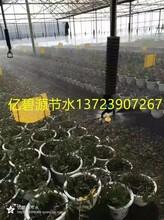 亿碧源供应蔬菜滴灌喷灌过滤器