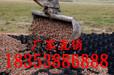 土工公司+佳木斯三维植被网集团公司、欢迎您