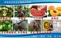 大量出售猕猴桃苗与三红柚苗