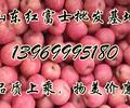 山东苹果批发价格、山东红富士苹果价格产地,