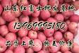 山东红富士基地红富士苹果价格山东苹果价格