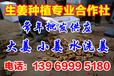 山东生姜价格最新行情山东潍坊生姜价格姜的批发价格