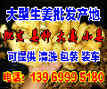 今日大黄姜价格与全国大黄姜产地批发平均价格