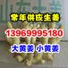 山东优质生姜批发、大黄姜、小黄姜、老姜、半斤以上、可以水洗