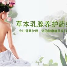 香港艾妮草本乳腺养护药疗膜