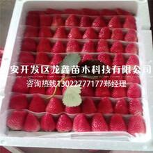 优质的草莓苗新品种指导报价图片