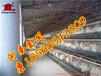 金鳳雞籠廠家銷售冷鍍鋅蛋雞籠養設備