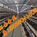 畢節市蛋雞籠哪家好_金鳳自動化養雞設備雞籠廠家