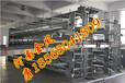 金鳳雞籠廠家銷售自動化層疊式蛋雞籠養設備
