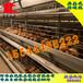 养鸡自动化设?#31119;?#20843;层层叠式蛋鸡笼,金凤鸡笼