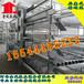 邯郸大型养殖设备金凤鸡笼阶梯式育雏笼5万只养殖设备金凤牧业