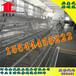 自动化养鸡设备山东金凤鸡笼蛋鸡养殖设备厂家3列3层蛋鸡饲养设备