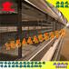 哈爾濱西平金鳳雞籠JF種雞養殖設備四層最新消息