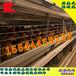 自动化育雏笼_金凤P15自动化养鸡设备_金凤鸡笼