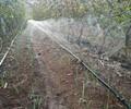 沅陵县喷灌带持久耐用湖南蔬菜种植专用微喷带