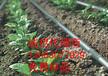 新疆大棚大田葡萄灌溉用滴水管带