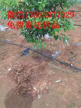 长期销售滴灌管供应内镶圆柱式滴灌管果树滴灌