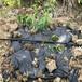彰化果樹滴灌管供應農田果園水利灌溉設施果園滴灌管