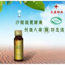 沙棘酵素的作用与功效