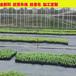 福建抗老化大棚防草布除草布园艺地布果园农用黑色地布地钉